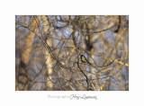 01 2017 D_MG_0091 animal oiseau Vaugrenier.jpg