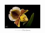 02 2017 F _MG_0912 nature orchide�e  .jpg