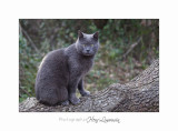 02 2017 G Nature bois loup chat_MG_ .jpg