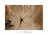 02 2017 G Nature bois loup_MG_0838 .jpg