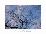 02 2017 G Nature bois loup_MG_0875 .jpg