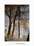02 2017 G Nature bois loup_MG_0881 .jpg
