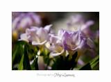 04 2017 A _MG_9988 Fleurs jardin Mouans Sartoux.jpg
