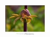 04 2017 C IMG_0463 Nice Fleur nature .jpg
