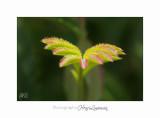 04 2017 C IMG_0464 Nice Fleur nature .jpg