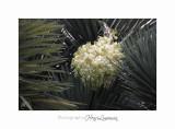 04 2017 C IMG_0483 Nice Fleur nature .jpg