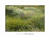 04 2017 C IMG_0485 Nice Fleur nature .jpg