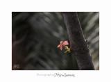 04 2017 C IMG_0487 Nice Fleur nature .jpg