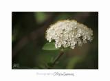 04 2017 C IMG_0514 Nice Fleur nature .jpg