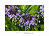 04 2017 C IMG_0521 Nice Fleur nature .jpg