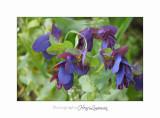 04 2017 C IMG_0540 Nice Fleur nature .jpg