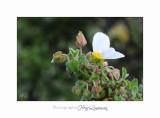 04 2017 C IMG_0545 Nice Fleur nature .jpg