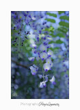 04 2017 D IMG_0998 Nature Jardin fl.jpg