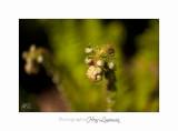 04 2017 D IMG_1015 Nature Jardin fl .jpg
