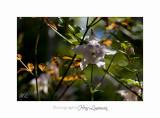 04 2017 D IMG_1026 Nature Jardin fleur de Pot.jpg