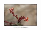 04 2017 D IMG_1057 Nature Jardin fl.jpg
