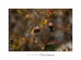 04 2017 D IMG_1140 Nature Jardin fl.jpg