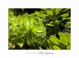 04 2017 E IMG_0583 Italie hanbury Jardin.jpg