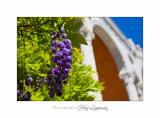 04 2017 E IMG_0614 Italie hanbury Jardin.jpg
