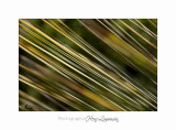 04 2017 E IMG_0666 Italie hanbury Jardin.jpg