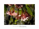 04 2017 E IMG_0684 Italie hanbury Jardin.jpg