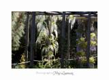 04 2017 E IMG_0847 Italie hanbury Jardin.jpg