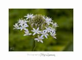 04 2017 E IMG_0860 Italie hanbury Jardin.jpg