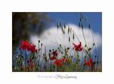 05 2017 B IMG_7727 Toscane Scarlino.jpg