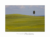 05 2017 B IMG_7986 Toscane campagne .jpg