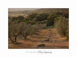 05 2017 B IMG_8292 Toscane Campagne .jpg