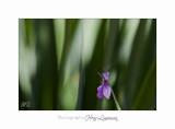 05 2017 D IMG_0712 Italie hanbury jardin fleur.jpg