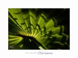 05 2017 D IMG_0738 Italie hanbury calligraphie ve�ge�tale.jpg