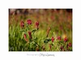 05 2017 D IMG_0791 Italie hanbury jardin fleur.jpg