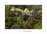05 2017 D _MG_4105 Italie hanbury jardin fleur.jpg
