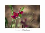 05 2017 E IMG_7345 Jardin MIP Mouan .jpg