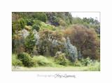 05 2017 G IMG_7156 Pe�gomas ecluse nature Fleurs.jpg