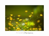 05 2017 G IMG_7210 Pe�gomas ecluse nature Fleurs.jpg