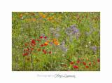 05 2017 G IMG_7294 MIP Jardin Mouan .jpg