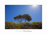05 2017 H IMG_7513 Ile Ste Margueri .jpg