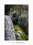 05 2017 H IMG_7514 Ile Ste Margueri .jpg