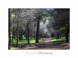 05 2017 H IMG_7541 Ile Ste Margueri .jpg