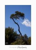 05 2017 H IMG_7547 arbre Ste Marguerite.jpg