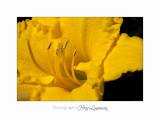 06 2017 L IMG_8938 Fleurs cyclades .jpg