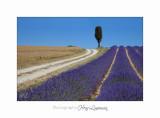 06 2017 L _MG_6389 Magali Lavandes  fleur chemin.jpg