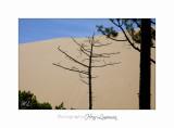 07 2017 IMG_9103 Dune du Pilat.jpg