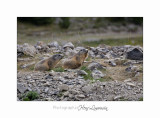 08 2017 IMG_9736 BEUIL Marmottes.jpg