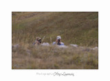 08 2017 IMG_9745 BEUIL Marmottes.jpg