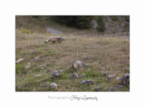 IMG_9749 BEUIL Marmottes.jpg