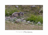 08 2017 IMG_9755 BEUIL Marmottes.jpg