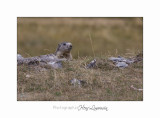 08 2017 IMG_9786 BEUIL Marmottes.jpg